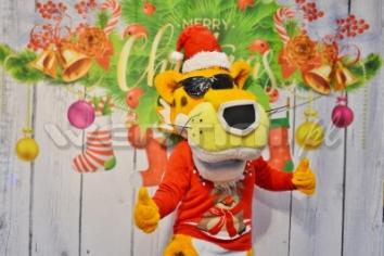 Chester, świąteczne żywe maskotki do wynajęcia
