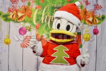 Kaczor Donald, mikołajkowa żywa maskotka do wynajęcia