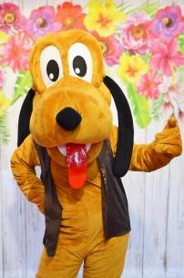 Pies Pluto, chodząca żywa maskotka z bajek Disneya