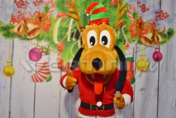 Pies Pluto, świąteczna żywa maskotka do wynajęcia