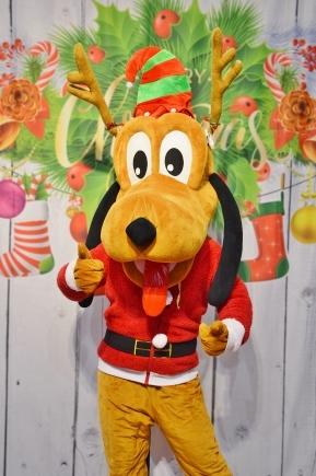 Pies Pluto, wynajem żywych maskotek na imprezy i eventy